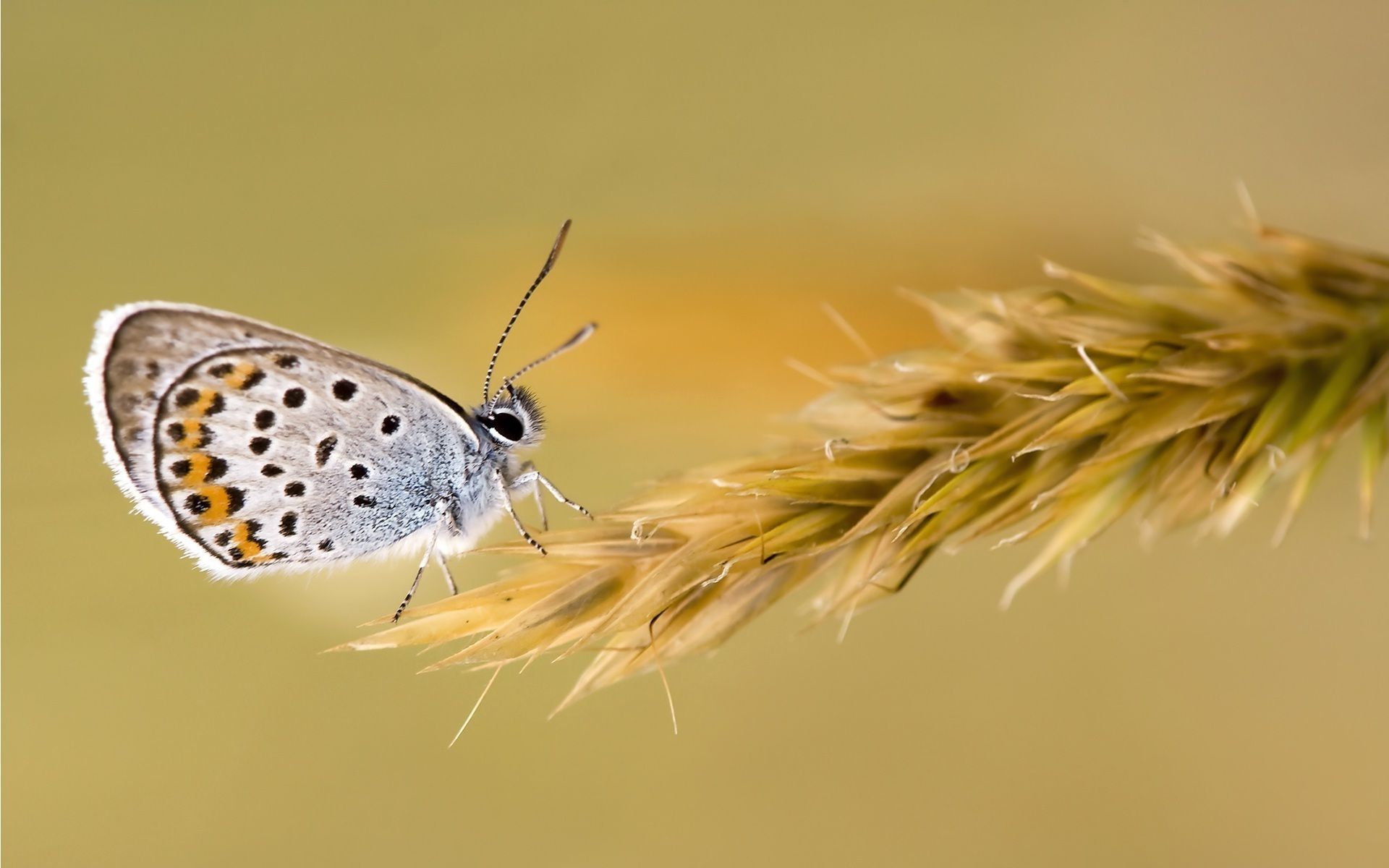 latest wallpapers of butterflies - photo #11