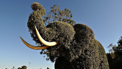 elephant-shaped-bush-hd-wallpaper