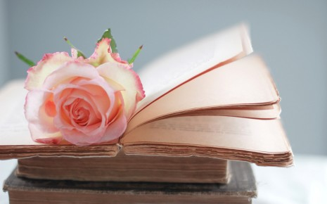 rose-on-a-book-flower-hd-wallpaper