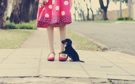 Cute puppy on the Girl leg HD wallpaper