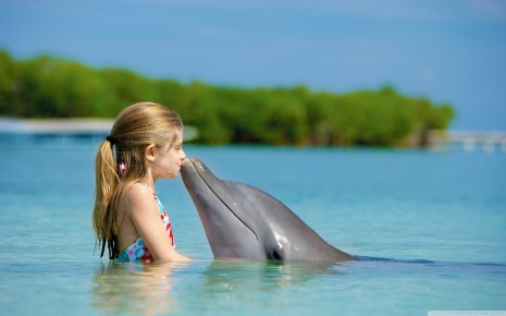 kissing dolphin