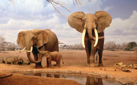 Animals elephants baby elephant baby animals wallpaper
