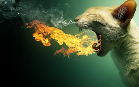 Cat in fire wallpaper