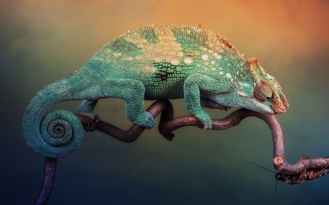 Chameleon tightrope on branch wallpaper