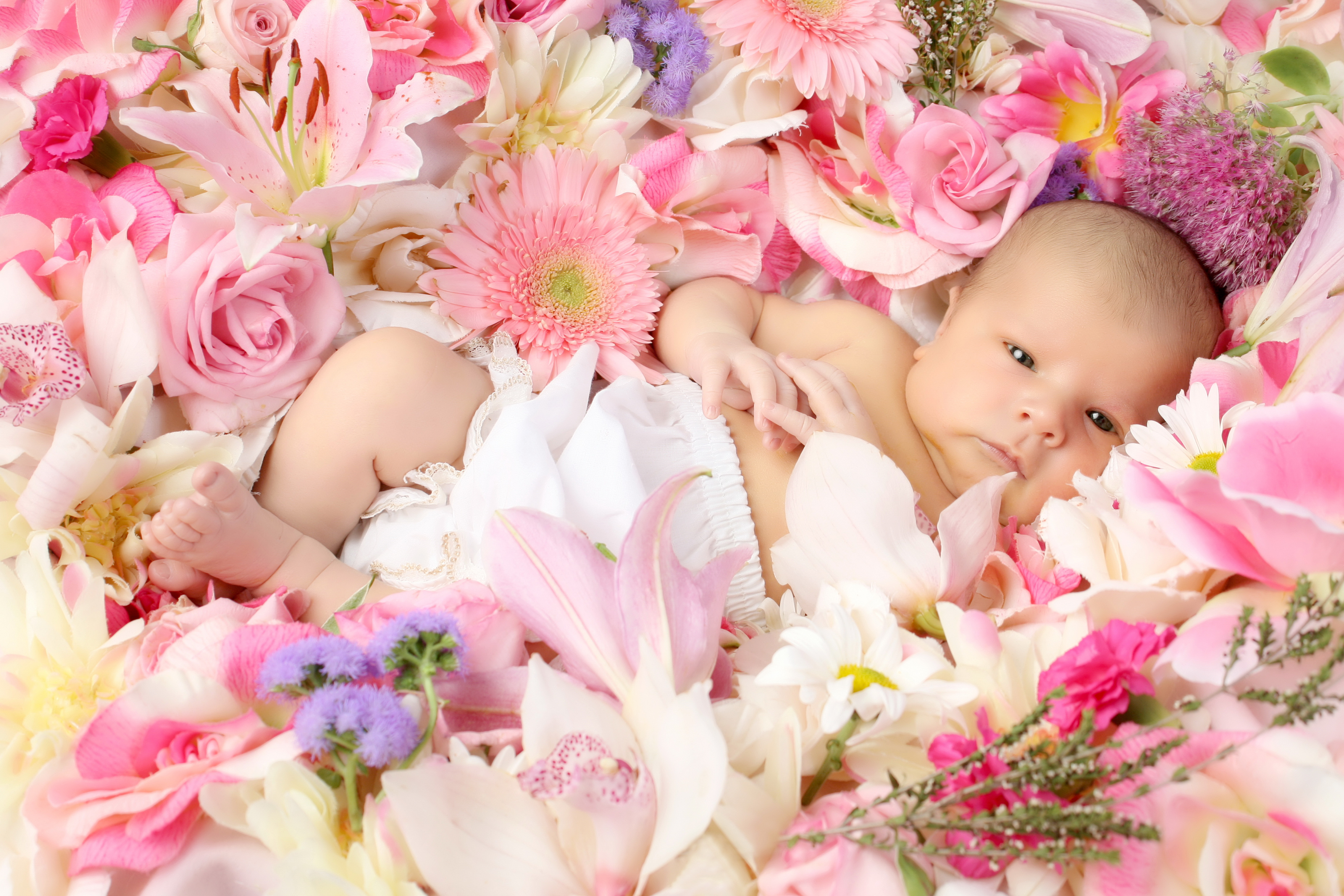 A cute baby on Flowers HD wallpaper   HD Latest Wallpapers