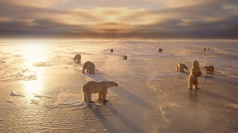 Animals bears polar-bears arctic winter seasons ice sunlight wallpaper