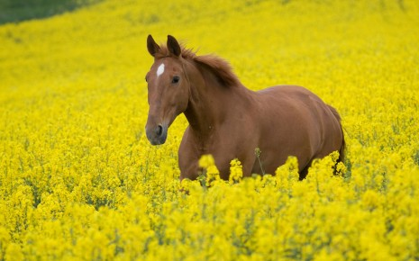 horse and flower