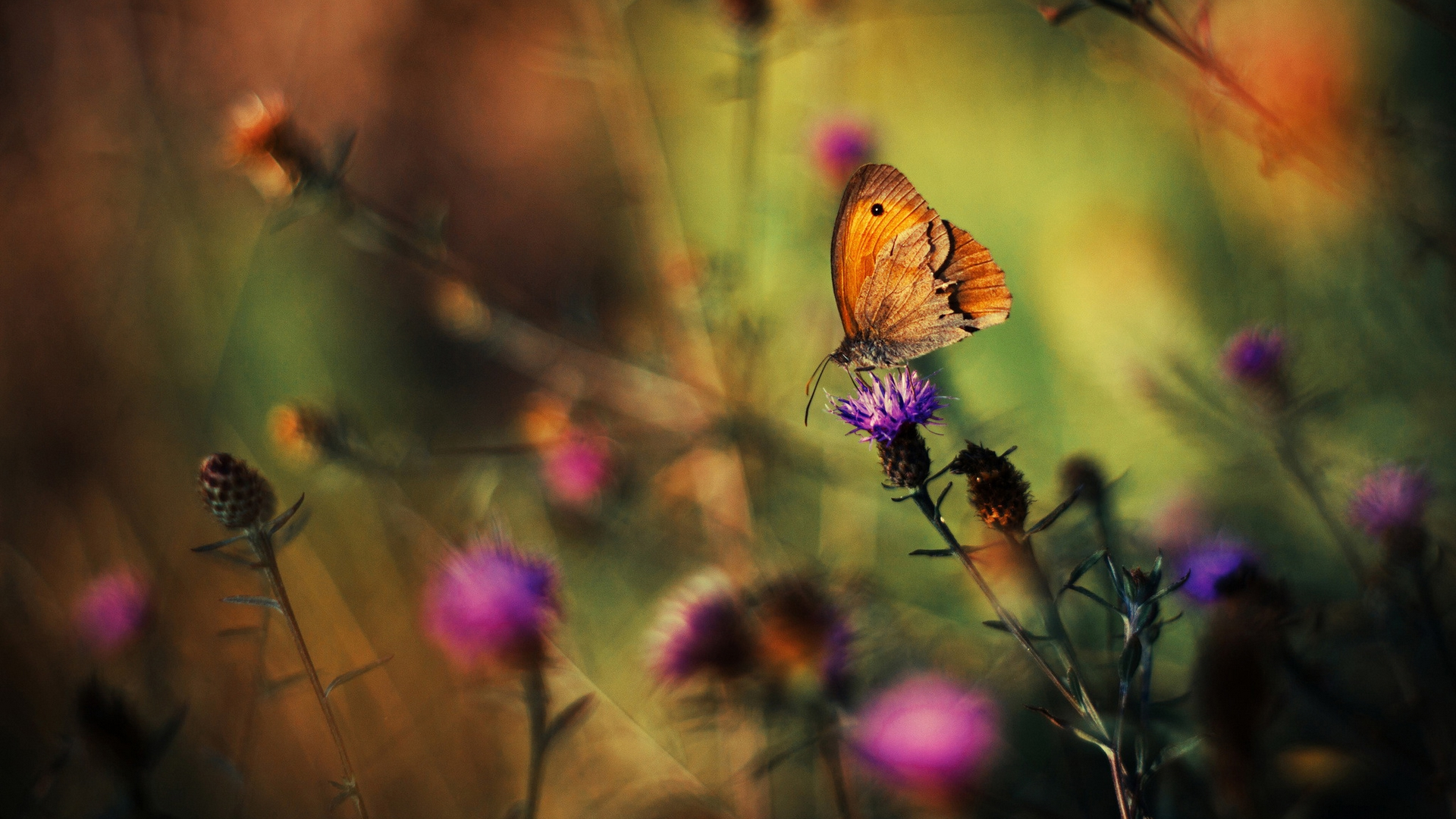 latest wallpapers of butterflies - photo #16