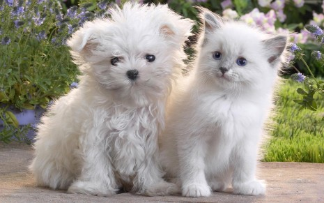 White puppy and kitten