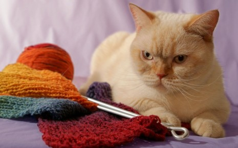 Cat with knitted scarf HD wallpaper