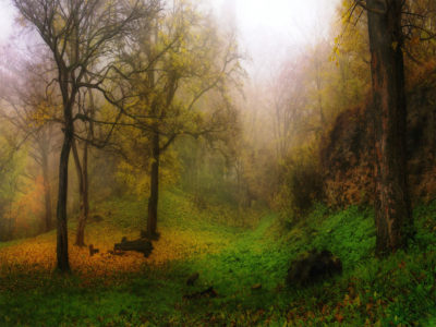 Foggy-autumn-forest-HD-wallpaper