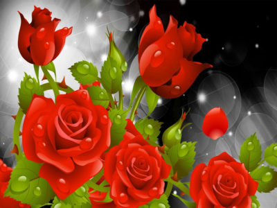 Red Roses HD wallpaper