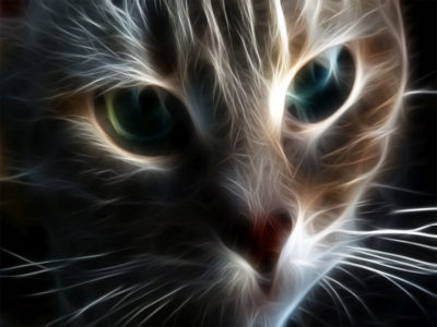 Cat Face HD wallpapers