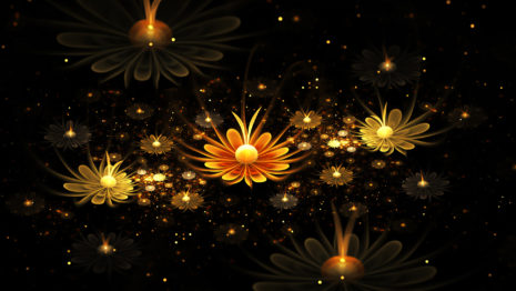 Glowing flowers hd wallpaper