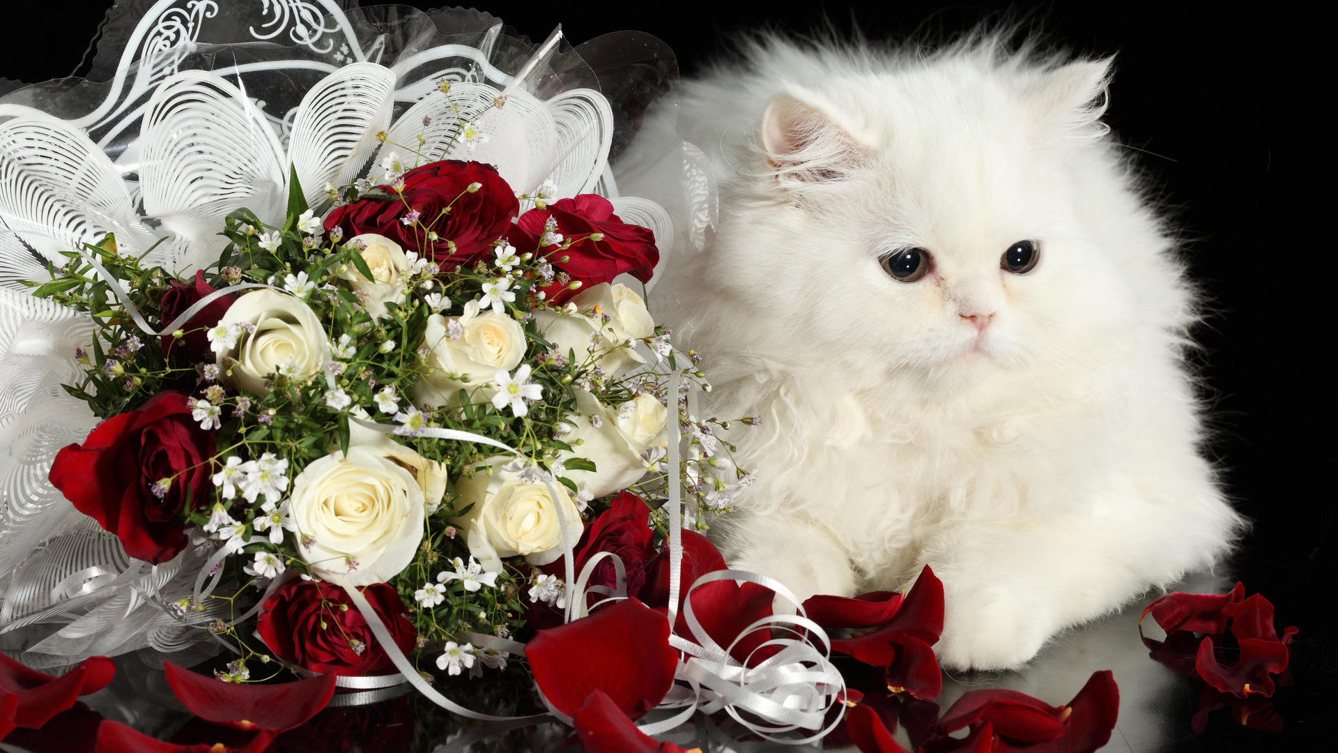 Kitten with Roses HD wallpaper | HD Latest Wallpapers
