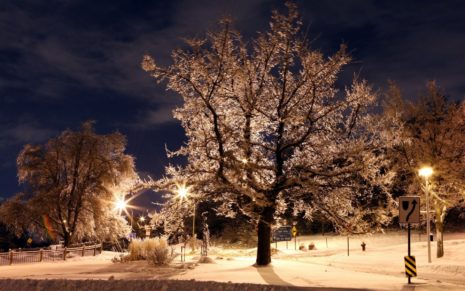 winter-night-in-the-park-hd-wallpaper