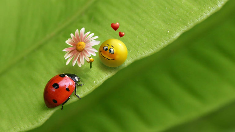 ladybug-and-smiley-face-hd-wallpaper