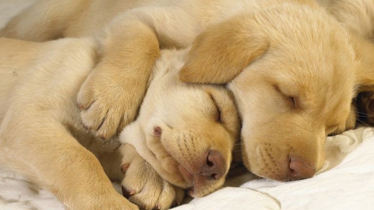 sleeping-dogs-hd-wallpaper