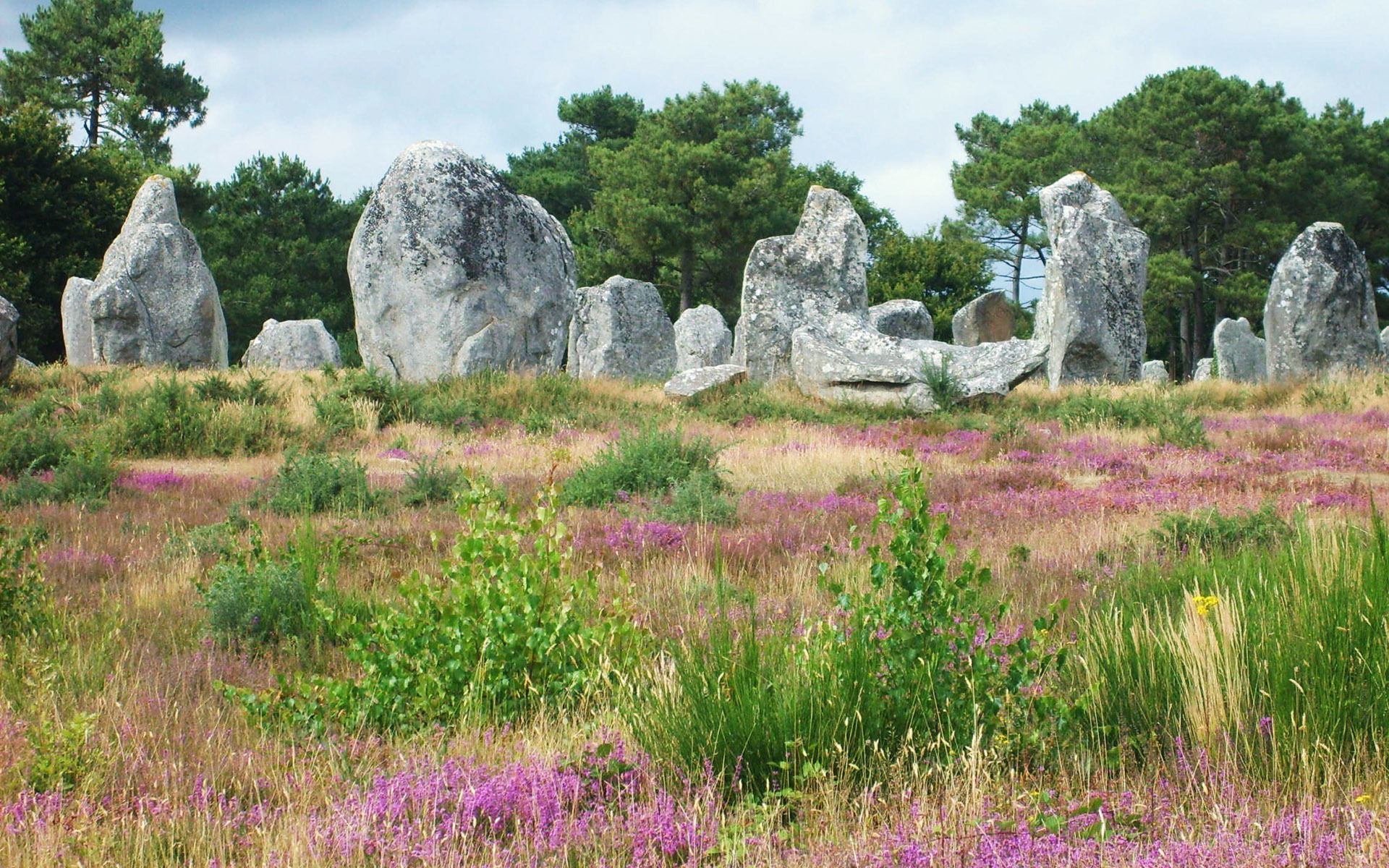 stones-in-the-grass-hd-wallpaper