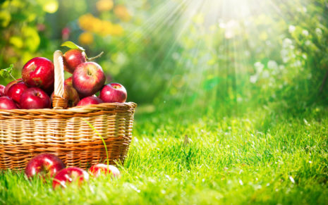 Apples Basket in grass HD wallpaper