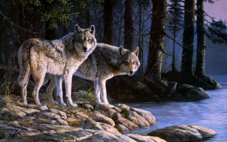 Wolves at river digital Art HD wallpaper