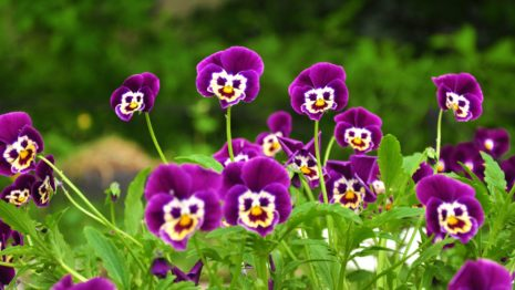 funny purple flowers