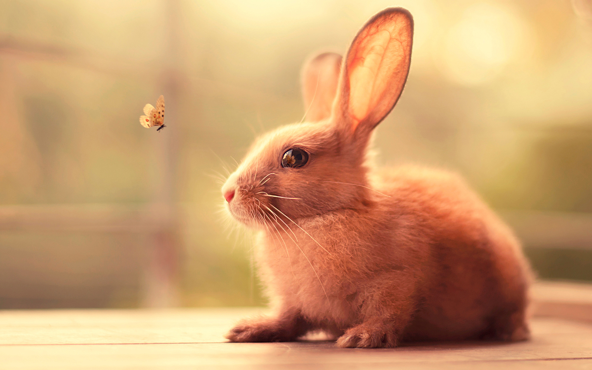 Butterfly flying towards a ginger rabbit wallpaper