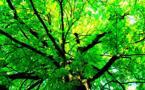 Green tree HD wallpaper