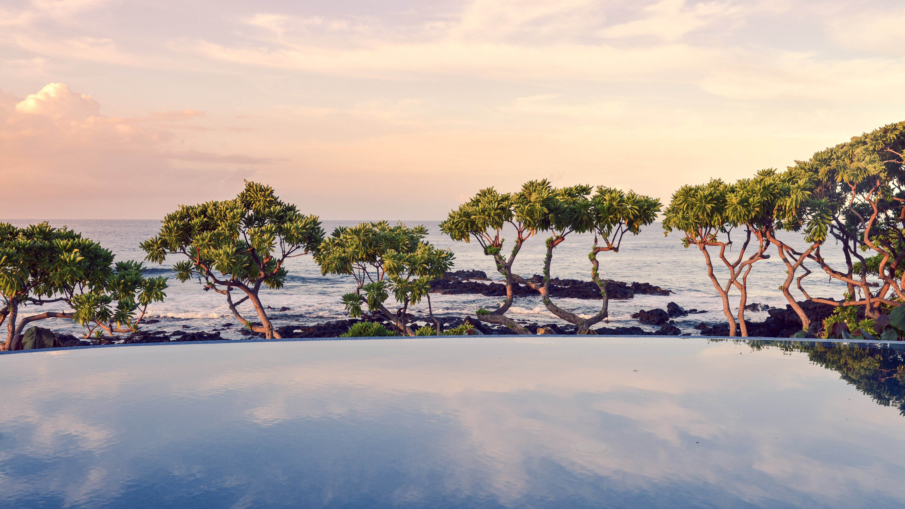 Trees on the ocean side HD wallpaper