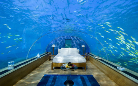 Underwater bed wallpaper