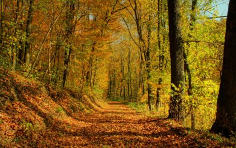 Autumn Path Passing Through The Forest HD Wallpaper