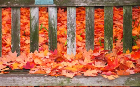 Autumn colors on the bench HD Wallpaper