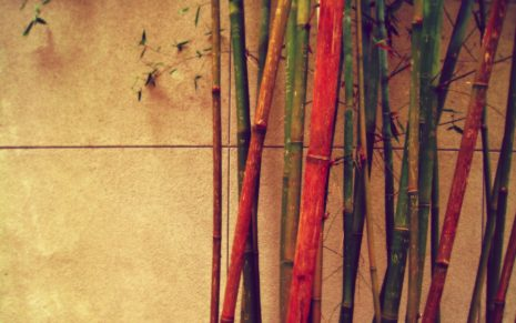 Bamboo Sticks Against The Wall HD Wallpaper