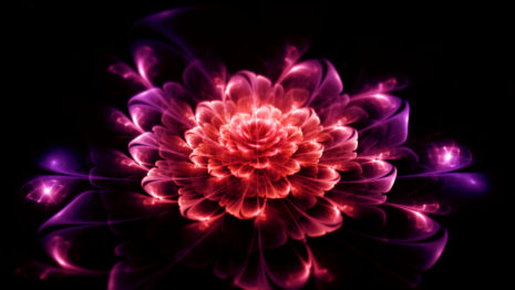 Digital Flower HD Wallpaper