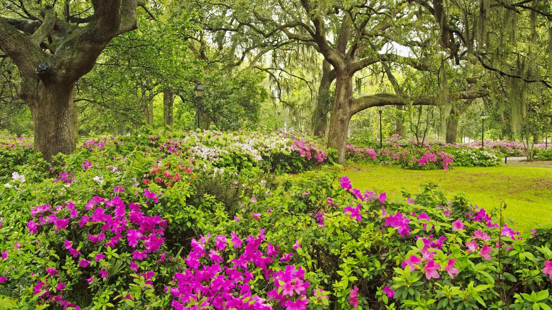 Hd wallpaper garden - Flower Garden Hd Wallpaper