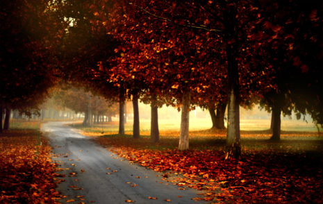 Photography Autumn HD Wallpaper