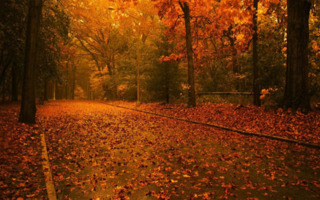 Amazing Autumn HD wallpaper