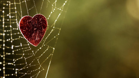 Heart Caught In A Spider Web HD Wallpaper 1