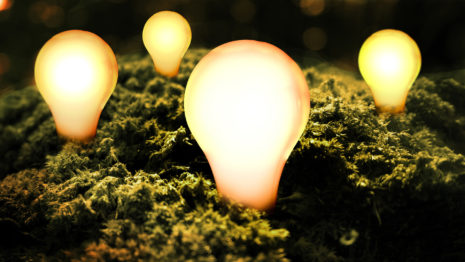 Light bulbs in the moss HD wallpaper