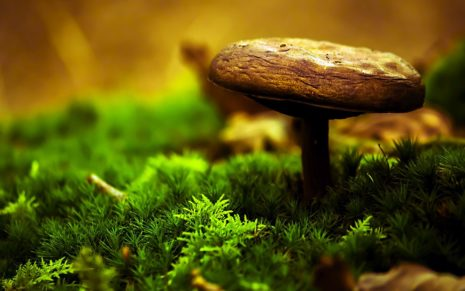 Mushroom in garden HD wallpaper