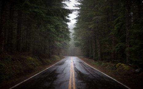 Rainy Forest Road HD Wallpaper