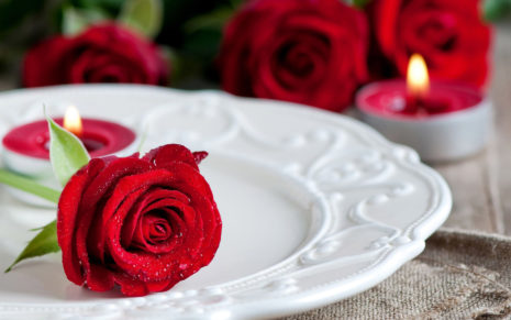 Red Rose on a plate HD wallpaper