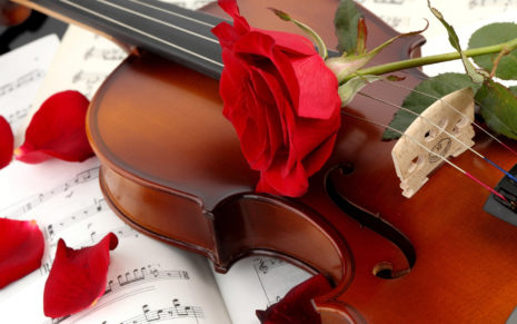 Red Rose on a violin HD wallpaper