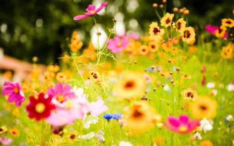 Vivid Flowers HD wallpaper