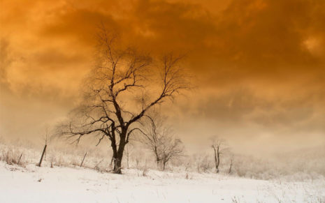 Orange sky above the winter field HD wallpaper