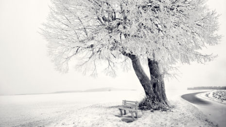 Frozen Tree HD wallpaper