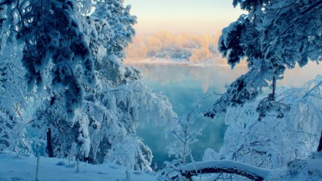 Frozen Trees HD wallpaper