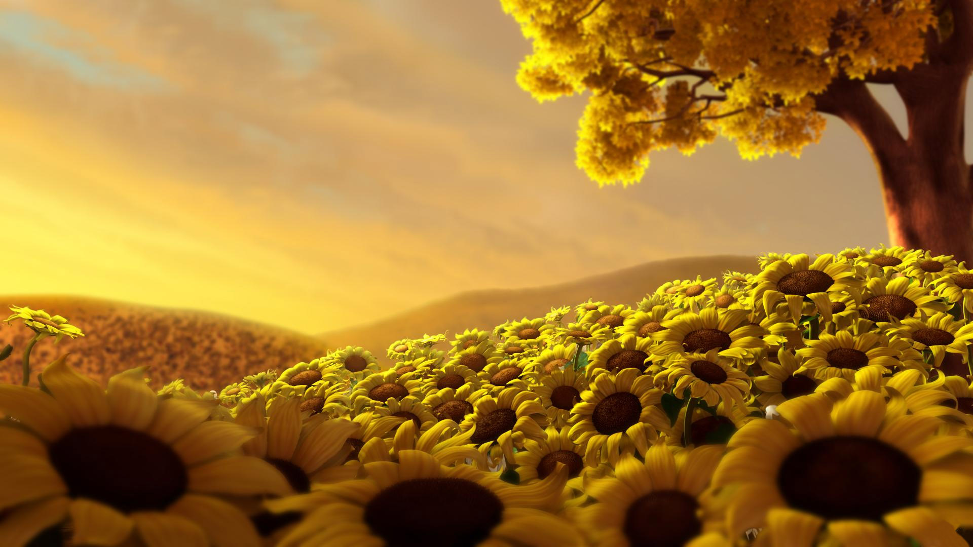 garden of sunflowers hd wallpaper | hd latest wallpapers
