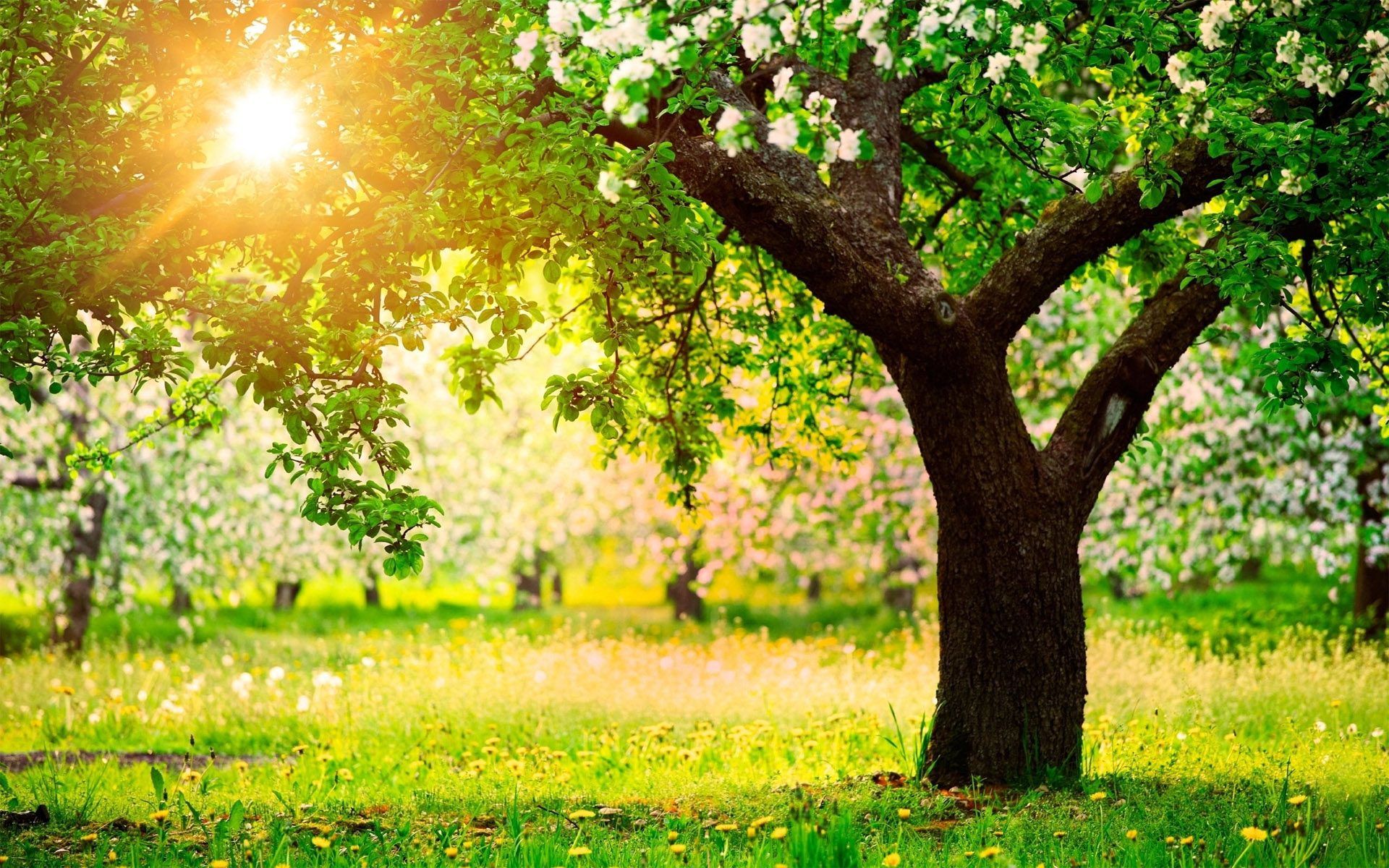 spring trees background - photo #10