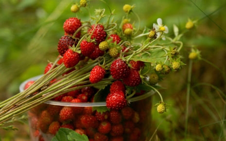 Strawberries with plants HD wallpaper